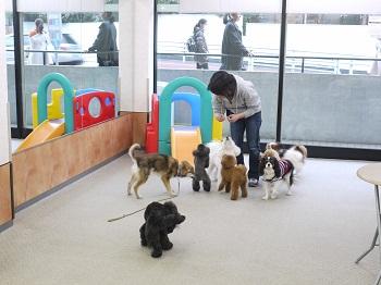日本ドッグトレーナー協会_保護犬レポート_すみれみずき2012-0329-2