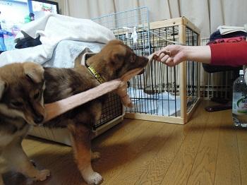日本ドッグトレーナー協会_保護犬_すみれ&みずき