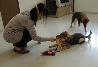 日本ドッグトレーナー協会_保護犬レポート_すみれみずき2012-0315-1
