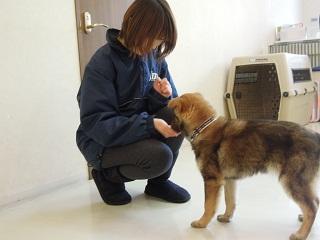 日本ドッグトレーナー協会_保護犬レポート_すみれみずき2012-0315-2
