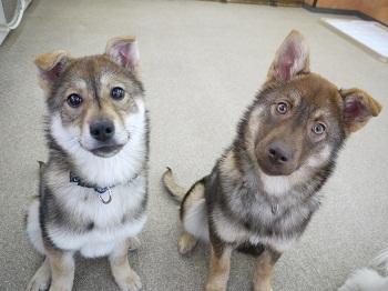 日本ドッグトレーナー協会_保護犬レポート_すみれみずき2012-0329-5