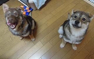 日本ドッグトレーナー協会_保護犬レポート_すみれみずき2012-0315-5