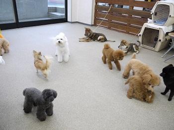 日本ドッグトレーナー協会_保護犬レポート_すみれみずき2012-0329-1