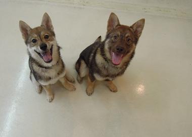 日本ドッグトレーナー協会_保護犬レポート_すみれ2012-0410-5