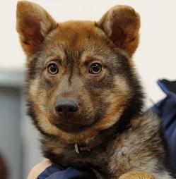 日本ドッグトレーナー協会_保護犬支援プロジェクト_20120410-4