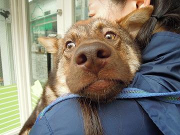 日本ドッグトレーナー協会_保護犬レポート_太斗_みずき2012-0427-3