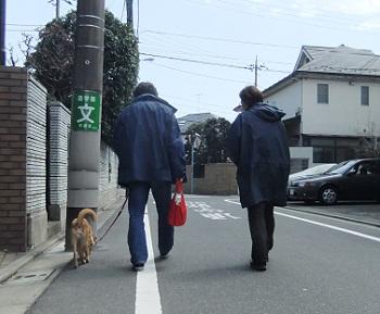 日本ドッグトレーナー協会_保護犬レポート_紅葉2012-0404-2
