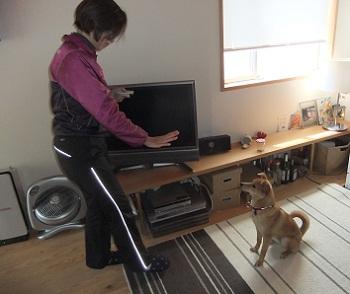 日本ドッグトレーナー協会_保護犬レポート_紅葉2012-0404-4