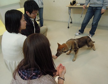 日本ドッグトレーナー協会_保護犬レポート_2012-0425-3