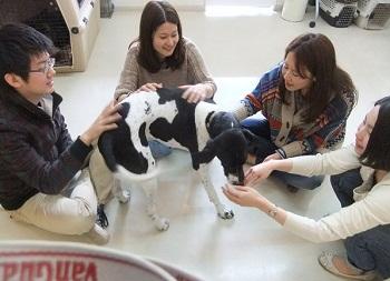 日本ドッグトレーナー協会_保護犬レポート_2012-0425-2
