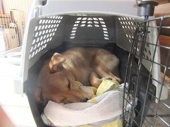 日本ドッグトレーナー協会_保護犬レポート_紅葉2012-0404-5