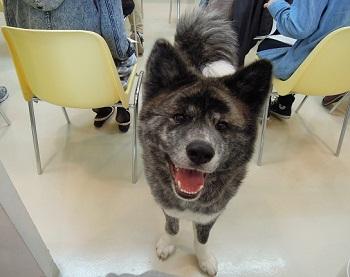 日本ドッグトレーナー協会_保護犬レポート_2012-0425-4