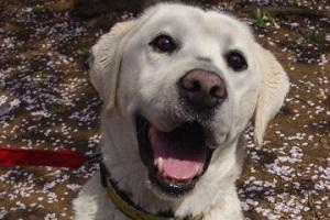 日本ドッグトレーナー協会_保護犬支援プロジェクト_20120410-2