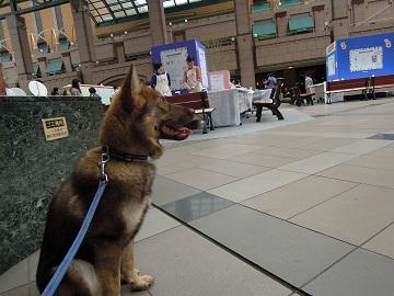 日本ドッグトレーナー協会_保護犬レポート_みずき2012-0509-2