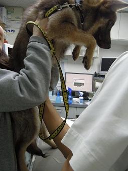 日本ドッグトレーナー協会_保護犬レポート_みずき2012-0523-1