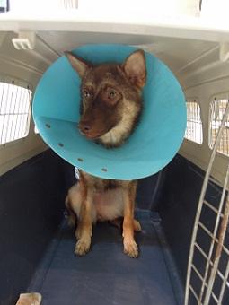 日本ドッグトレーナー協会_保護犬レポート_みずき2012-0523-2
