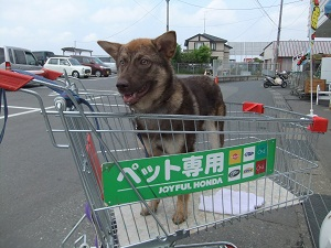 日本ドッグトレーナー協会_保護犬レポート_みずき2012-0509-4