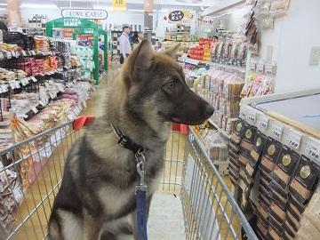 日本ドッグトレーナー協会_保護犬レポート_みずき2012-0509-5