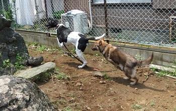日本ドッグトレーナー協会_保護犬レポート_みずき2012-0509-6
