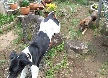 日本ドッグトレーナー協会_保護犬レポート_太斗2012-0512-3