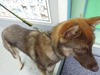 日本ドッグトレーナー協会_保護犬レポート_みずき2012-0517-1
