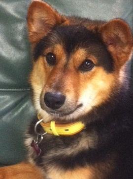 日本ドッグトレーナー協会_保護犬レポート_福2012-0621-1