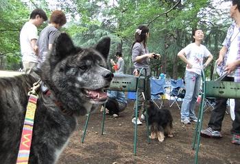 日本ドッグトレーナー協会_保護犬レポート_福2012-0626-3