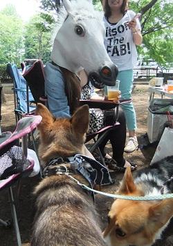 日本ドッグトレーナー協会_保護犬レポート_福2012-0626-4
