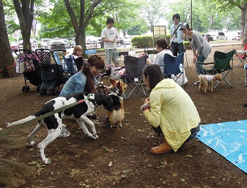 日本ドッグトレーナー協会_保護犬レポート_福2012-0626-5