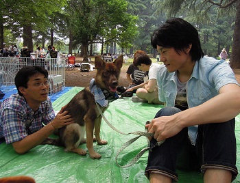 日本ドッグトレーナー協会_保護犬レポート_福2012-0626-6