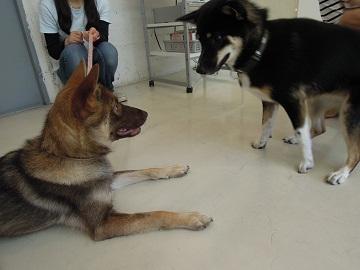 日本ドッグトレーナー協会_保護犬レポート_結2012-0620-2