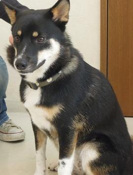 日本ドッグトレーナー協会_保護犬レポート_結2012-0620-1