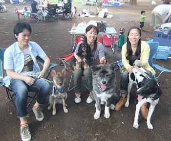 日本ドッグトレーナー協会_保護犬レポート_福2012-0626-7