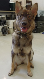 日本ドッグトレーナー協会_保護犬支援プロジェクト_保護犬レポート_みずき12-0720-1