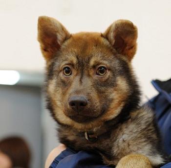 日本ドッグトレーナー協会_保護犬レポート_みずき2012-0706-1