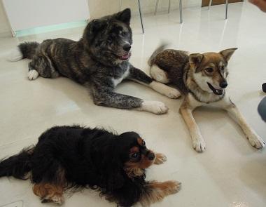 日本ドッグトレーナー協会_保護犬レポート_すみれ2012-0729-4