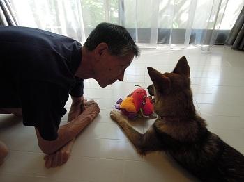 日本ドッグトレーナー協会_保護犬支援プロジェクト_保護犬レポート_みずき12-0704-4