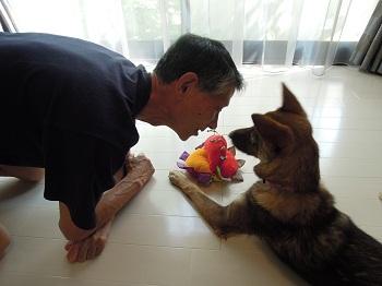 日本ドッグトレーナー協会_保護犬支援プロジェクト_保護犬レポート_みずき12-0704-5