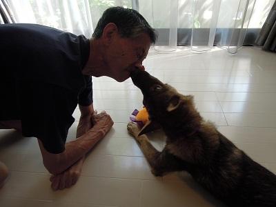 日本ドッグトレーナー協会_保護犬支援プロジェクト_保護犬レポート_みずき12-0704-6