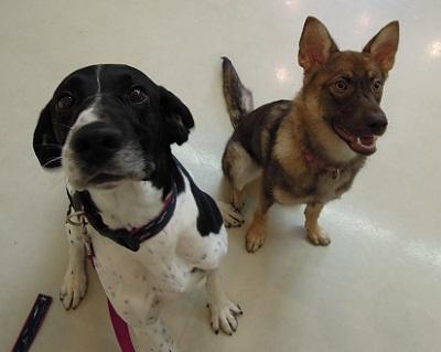 日本ドッグトレーナー協会_保護犬支援プロジェクト_保護犬レポート_みずき12-0704-8