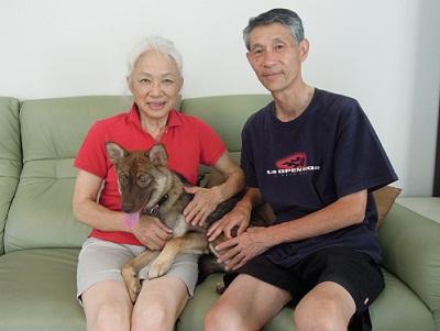 日本ドッグトレーナー協会_保護犬支援プロジェクト_保護犬レポート_みずき12-0704-7