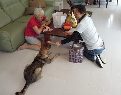日本ドッグトレーナー協会_保護犬支援プロジェクト_保護犬レポート_みずき12-0704-2