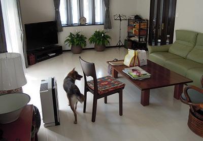 日本ドッグトレーナー協会_保護犬支援プロジェクト_保護犬レポート_みずき12-0704-1