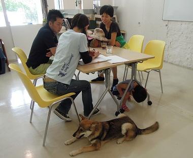 日本ドッグトレーナー協会_保護犬レポート_すみれ2012-0729-2