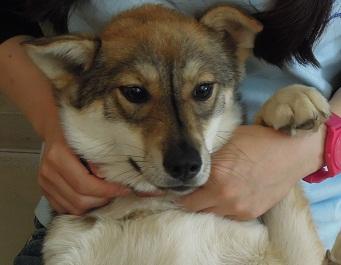 日本ドッグトレーナー協会_保護犬レポート_すみれ2012-0729-1