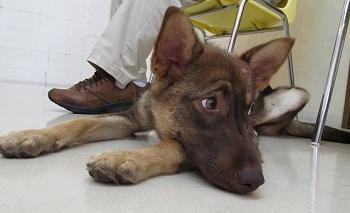 日本ドッグトレーナー協会_保護犬レポート_みずき2012-0708-3