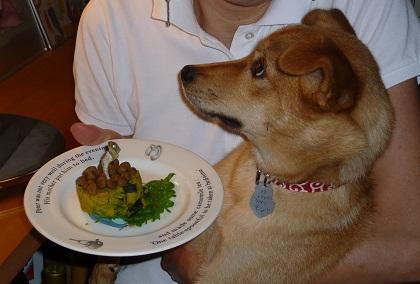 日本ドッグトレーナー協会_保護犬支援プロジェクト_保護犬(紅葉)_20120713-2