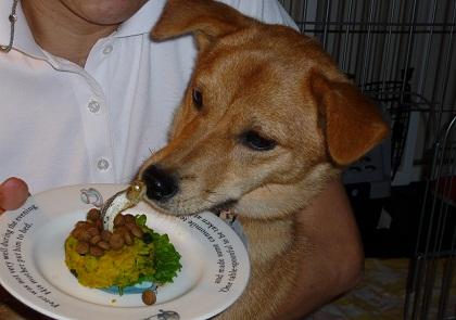 日本ドッグトレーナー協会_保護権支援プロジェクト_保護犬(紅葉)_20120413-01