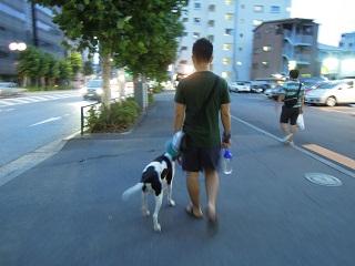 日本ドッグトレーナー協会_保護犬支援プロジェクト_太斗_20120801-1