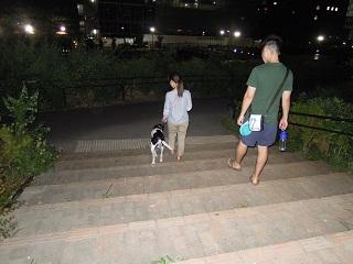 日本ドッグトレーナー協会_保護犬支援プロジェクト_太斗_20120801-2